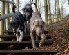 MS: Sejm przyjął ustawę wymierzoną przeciwko bestialskiemu traktowaniu zwierząt