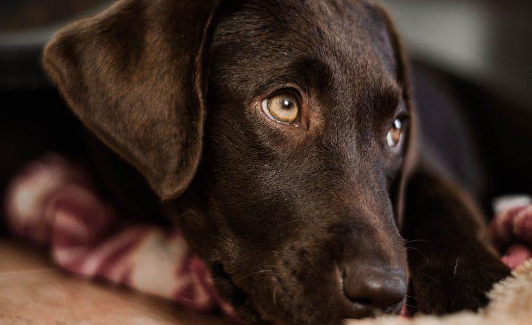 PK: 70-latek podejrzany o brutalne zabicie swojego psa