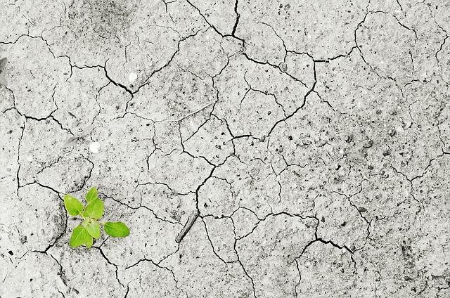 Do 100 tys. zł na zabezpieczenie gospodarstw rolnych przed suszą. We wrześniu ruszy nabór wniosków