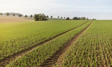Rolnicy poszkodowani przez COVID-19 dostaną nadzwyczajne wsparcie. W ciągu kilku tygodni trafi do nich ponad 1 mld zł