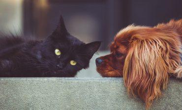 Trwają prace nad nowymi przepisami o schroniskach dla zwierząt. Planowane jest także obowiązkowe czipowanie psów i kotów